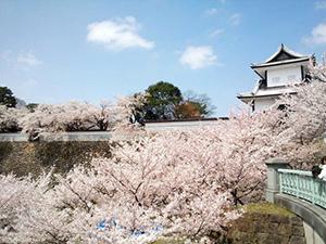 満開の桜並木、着物を着こなす金沢の人々。そんな場所で働きたい!